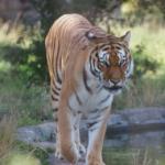 zoo chester magazyn atrakcje